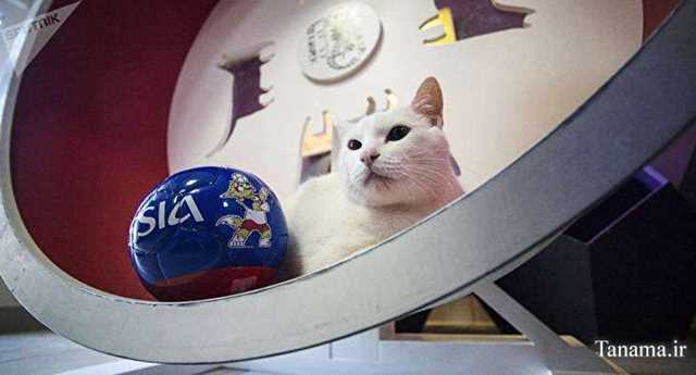 گربه پیشگوی جام جهانی روسیه