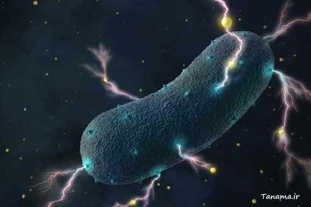 باکتری الکتریکی
